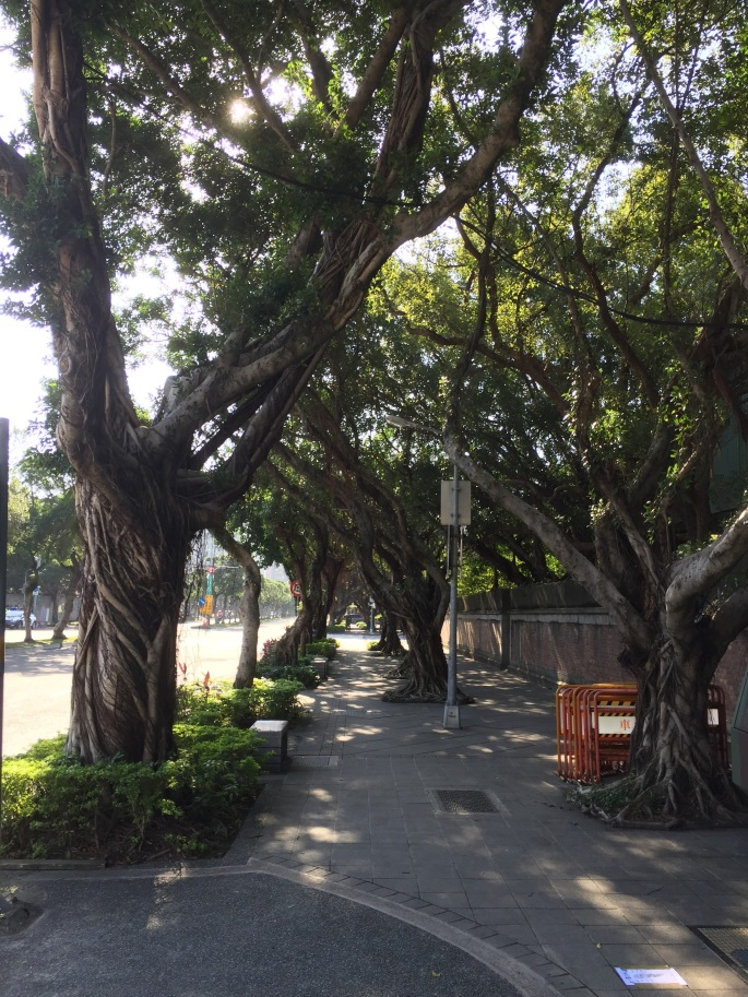 Taipei is beautiful, it's sidewalks laced with gorgeous trees