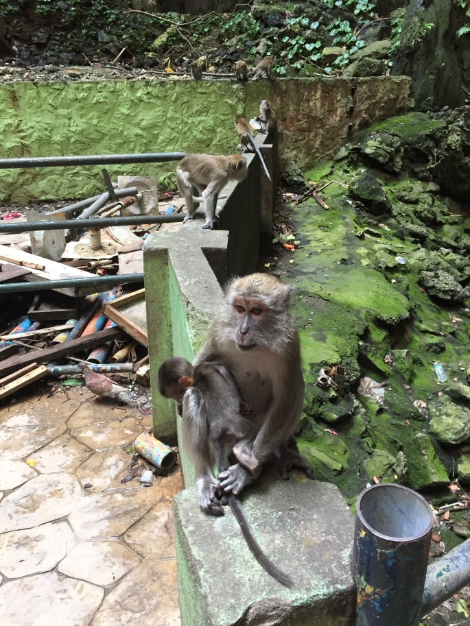 Monkeys with their babies lining the walls at Batu Caves